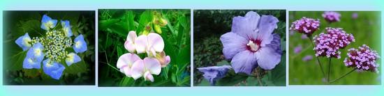 hydrangea, lathyrus, hibiscus, achillea by gijsje