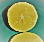 7th Sep 2017 - Sour-Seedy Lemon