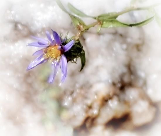 Wet flower, wet rock by dmdfday