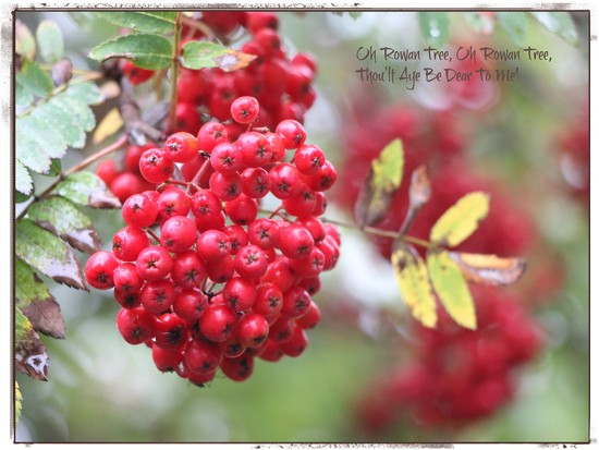 Berries Red and Bright! by jamibann