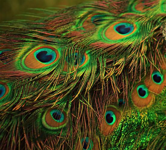 The Eyes Have It by jesperani