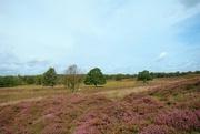14th Sep 2017 - flowering heather