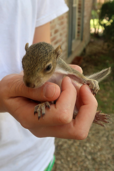 Baby Squirrel Harvey by ingrid01