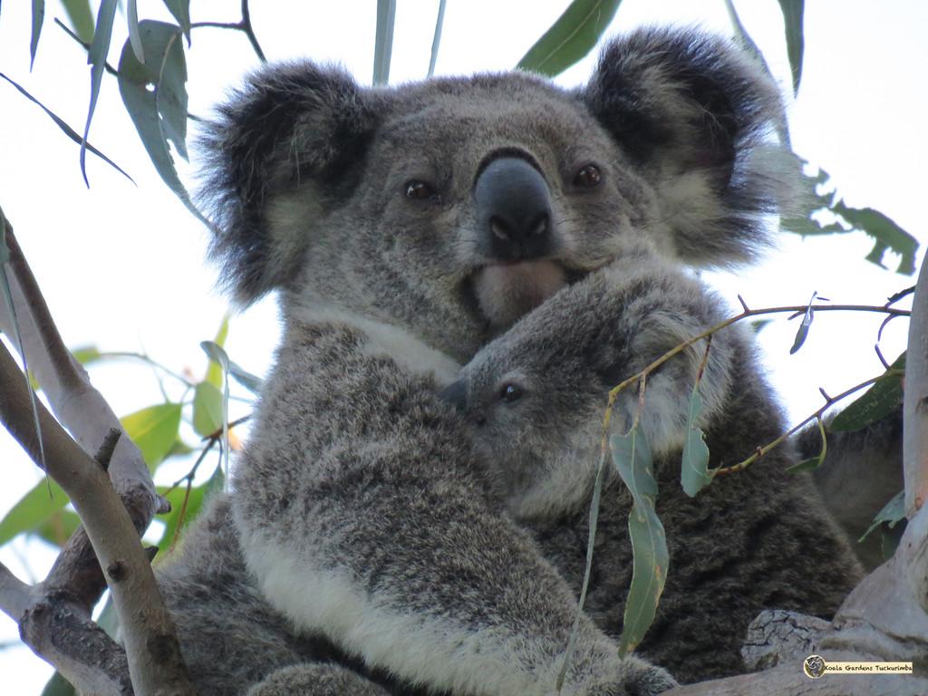 don't look by koalagardens