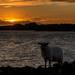 Ewe in my shot!