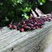 Pile of Beetles