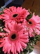 11th Sep 2017 - Lovely flowers
