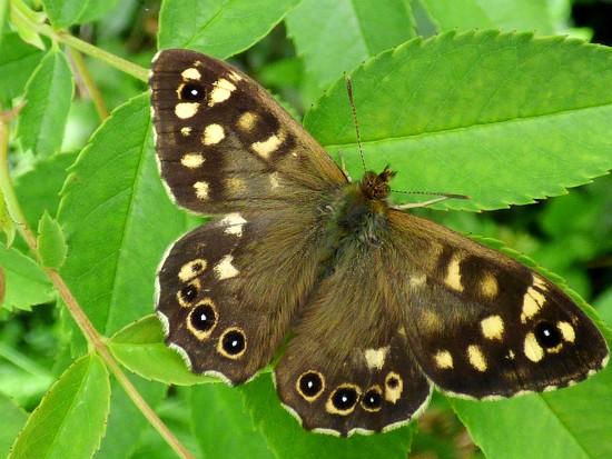 Still time for butterflies... by julienne1
