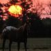 Kansas Sunrise 9-15-17