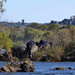 Hippos in the Zambezi