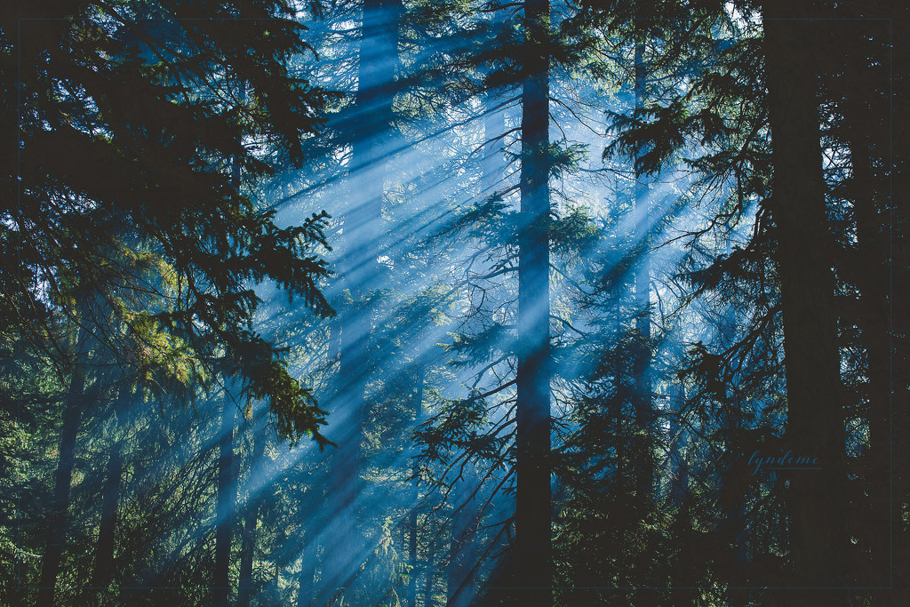 Forest Light by lyndemc