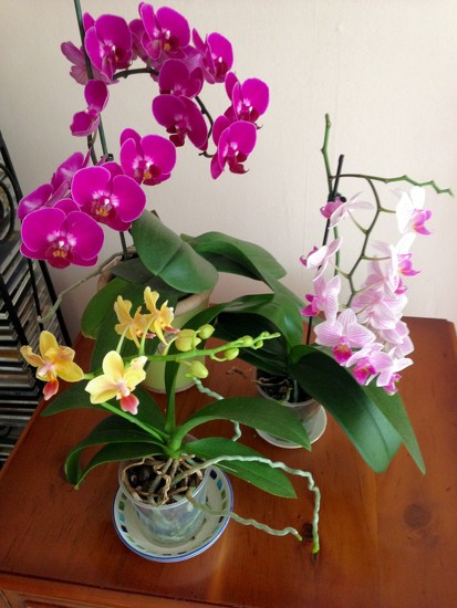 Orchid... by moominmomma