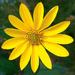 Very Yellow Flower