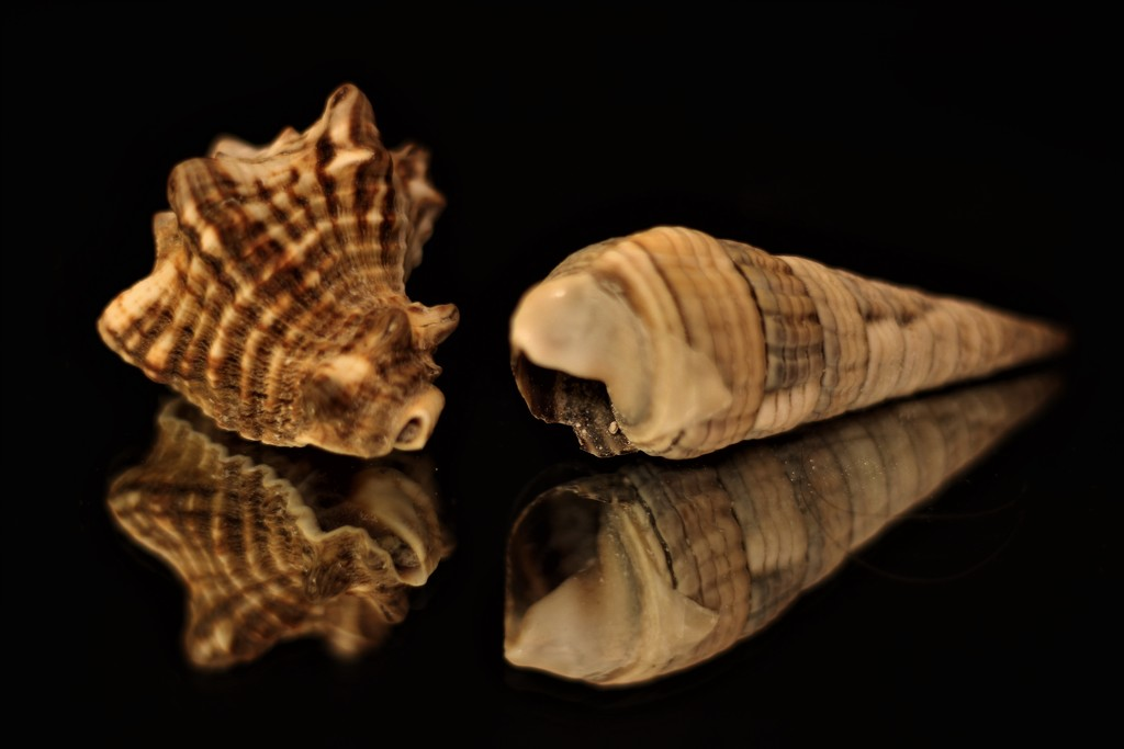Mirroring shells by vincent24