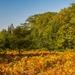 Fern Foliage Foreshadows Fall