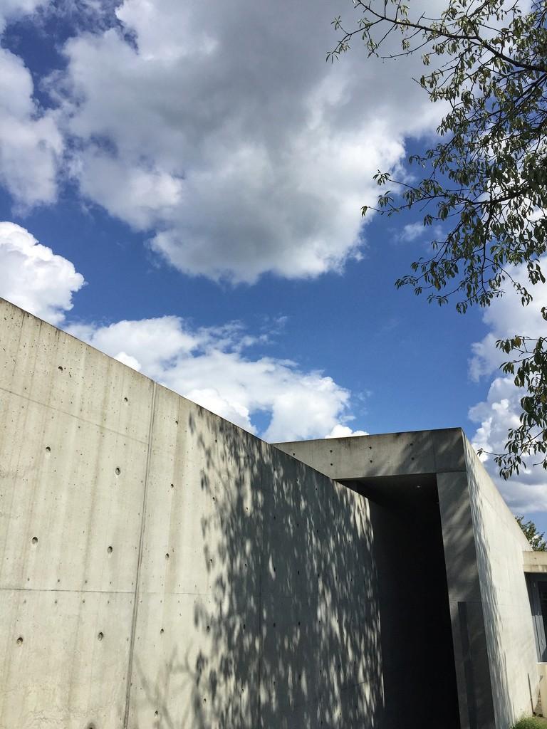 Nature and concrete.  by cocobella