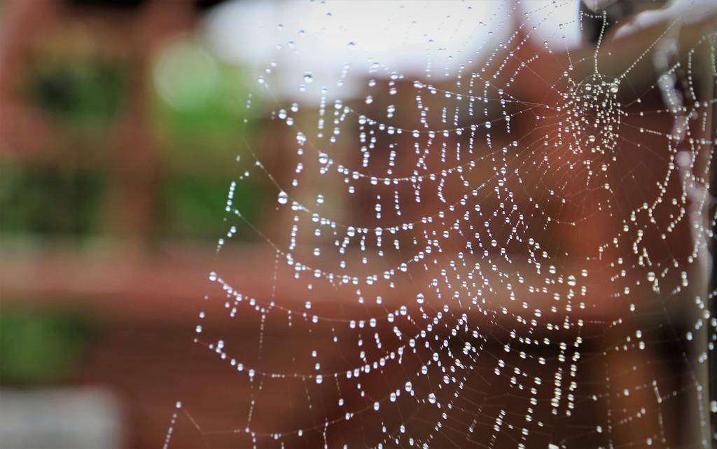 Dewy Web  by phil_sandford