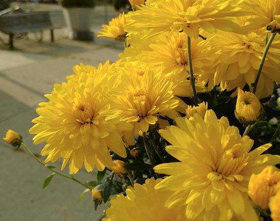 Market Flowers by houser934