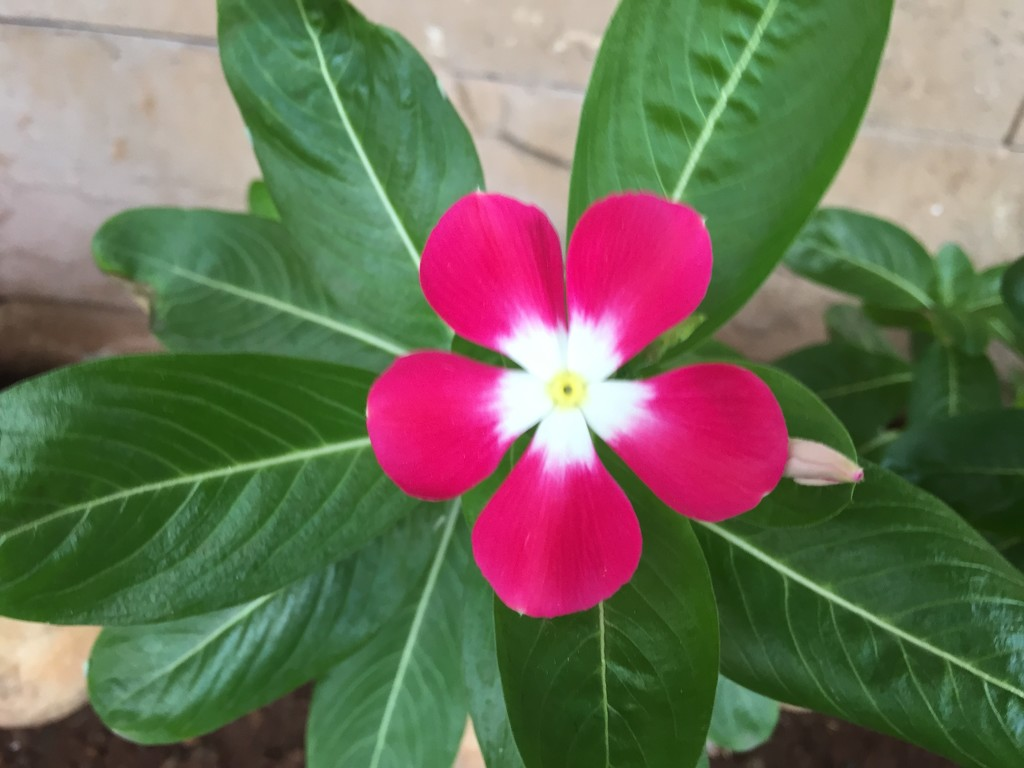 Tiny little perfect flower by veengupta