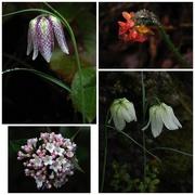 18th Sep 2017 -  Spring in the Botanic Gardens in the rain