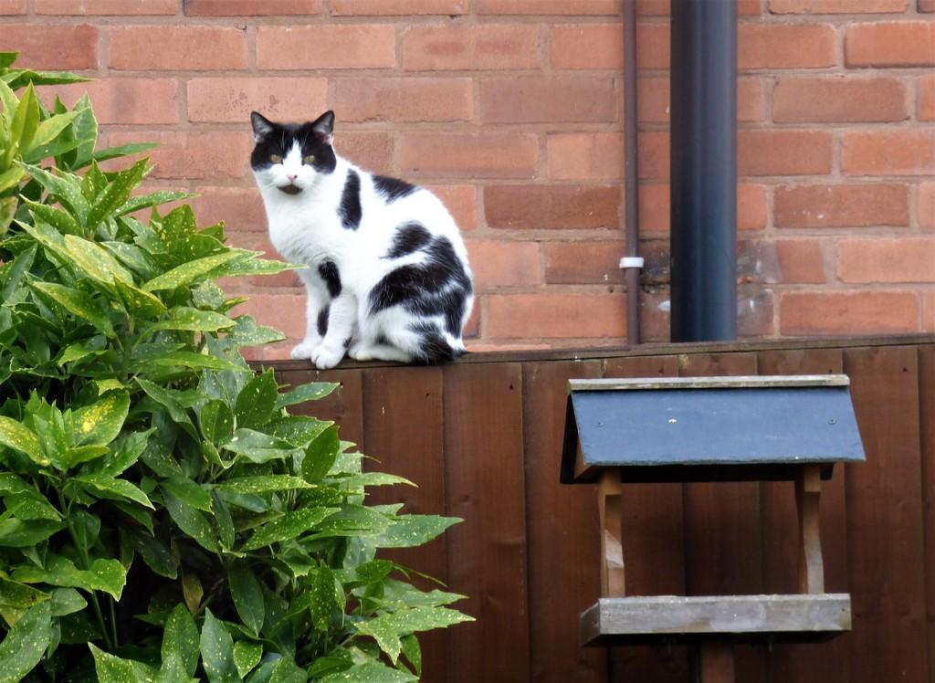 Naughty Miss Kitty ! by beryl