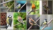 18th Sep 2017 - Garden birds