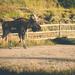 Rocky Mountain Wild Life by lyndemc