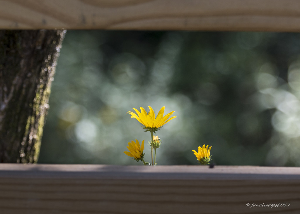 Flowers Frames by A Fence by jnorthington