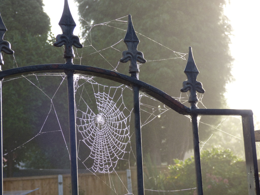 Morning  mist and cobwebs  by beryl