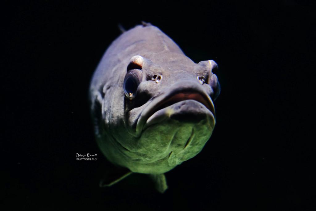Fish by dkbarnett