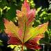 Happy Almost Autumn
