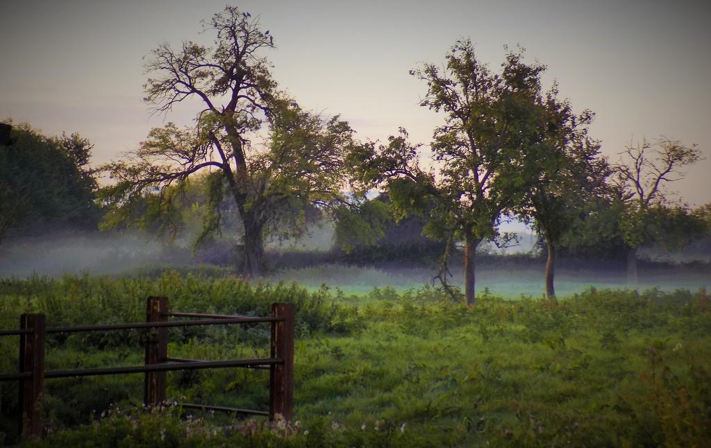 September mist by flowerfairyann