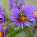 Pollen collector!