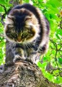21st Sep 2017 - Cat Walk
