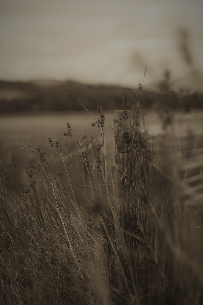 Fence, Gate and Fell by motherjane