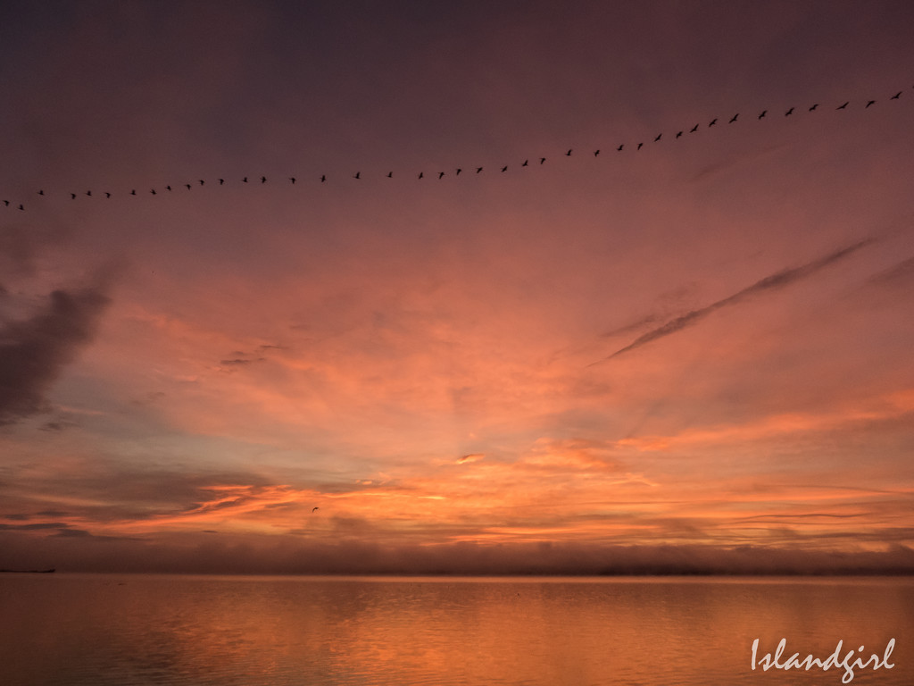 Canada Geese flying through the Sunrise  by radiogirl