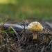 Yellow Mushroom 3 by loweygrace
