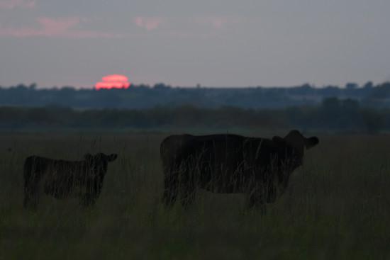 Kansas Sunset 9-29-17 by kareenking