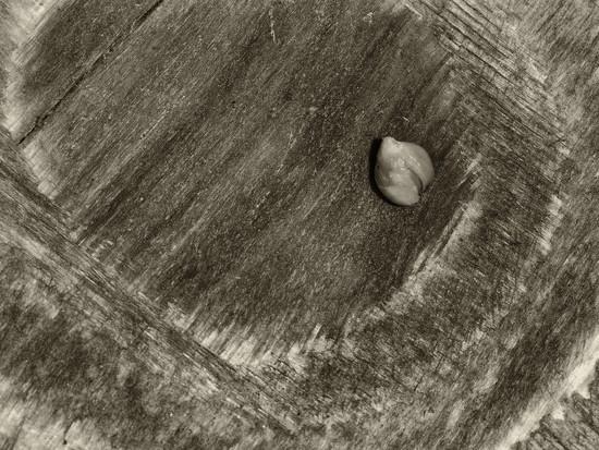 Seed by haskar
