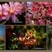 Garden Group Visit...