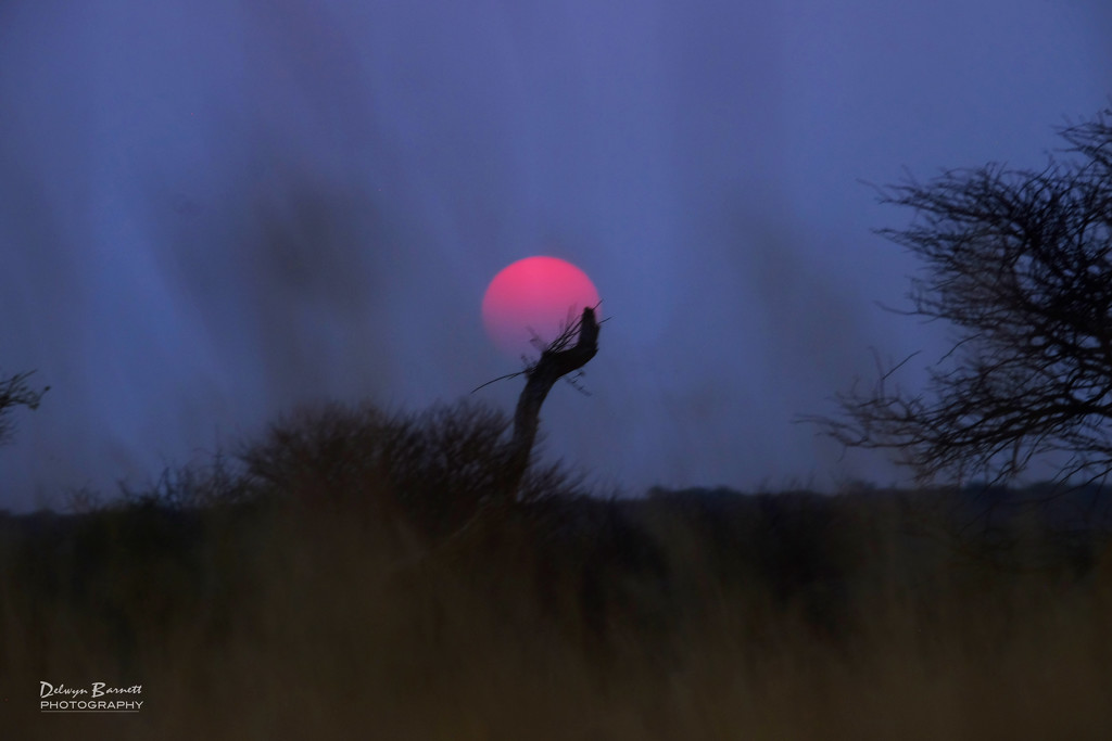 African Sunset by dkbarnett