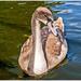 Soon,I'll Be A Swan