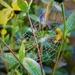 Cob-web  by beryl