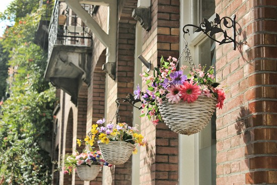 Hanging baskets by psychographer