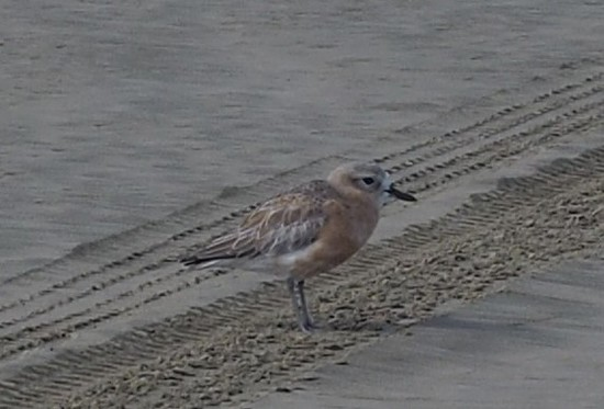 A sea bird , not sure what it is though by Dawn