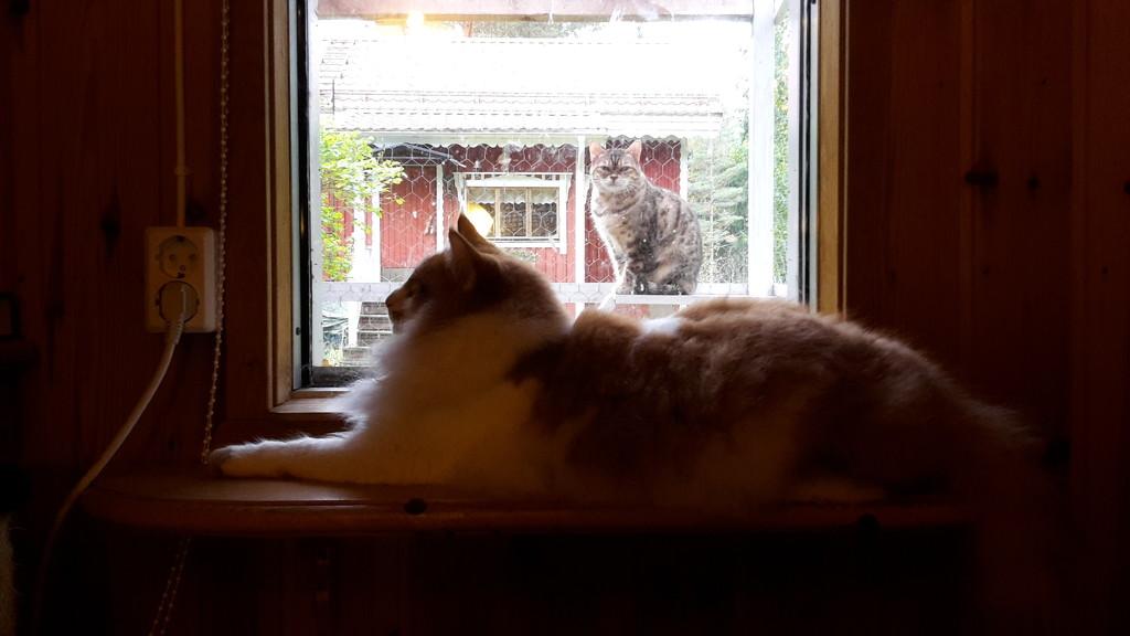 Sphinx and a photo-bomb kitty by katriak