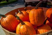22nd Sep 2017 - Pumpkin anyone