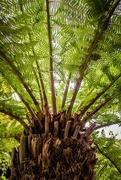 5th Sep 2017 - Tree fern