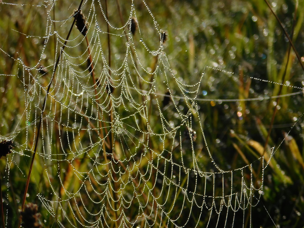 Bejewelled web by 365anne