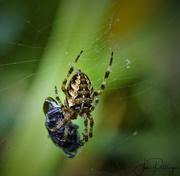 23rd Sep 2017 - Spider Wrap